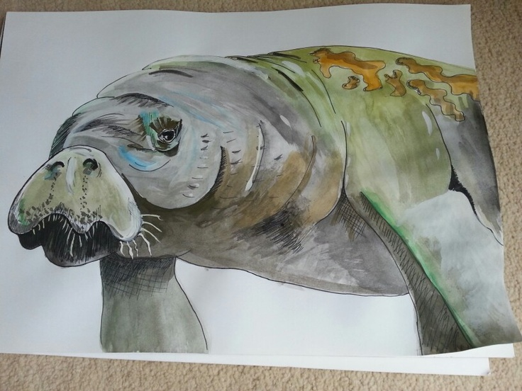 Manatee ink & watercolour