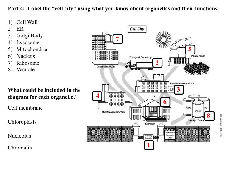 image result for cell function worksheets cell wall on cell wall function id=31117