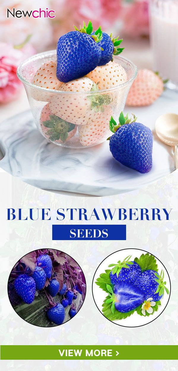 【50% off】500Pcs Blue Strawberry Seeds Heirloom…