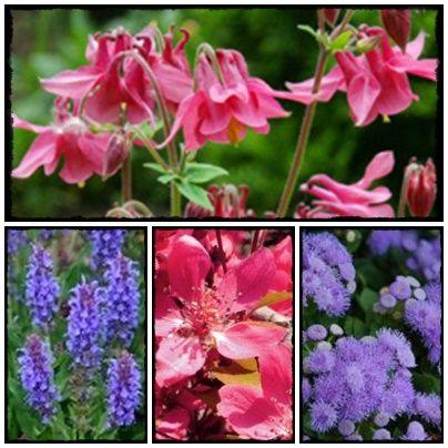 Spokojny Dom - blog o rodzinie, roslinach i moich wartościach.: Jakie rośliny przyciągną motyle do naszego ogrodu? Jak wzbogacić naszą faunę w ogrodzie.