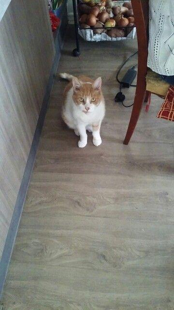 Minó bebé cucho gato