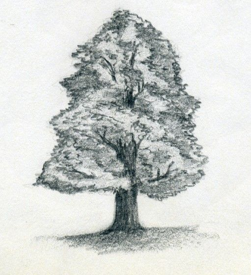 51 best how to draw realistic trees plants bushes and for Best tree drawing