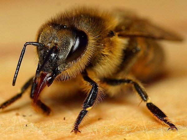 Men Pee on Beehive, Bees React - Neatorama
