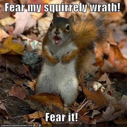 Funny squirrel Funny squirrel