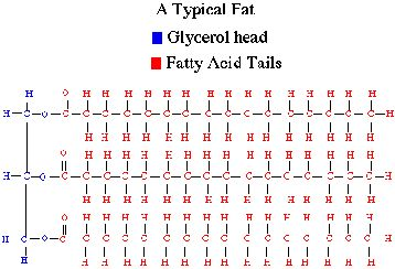 lipids fatty acid and amp Request pdf on researchgate   prolonged exposure to palmitate impairs fatty acid oxidation despite activation of amp-activated protein kinase in skeletal muscle cells   the aim of this study was .