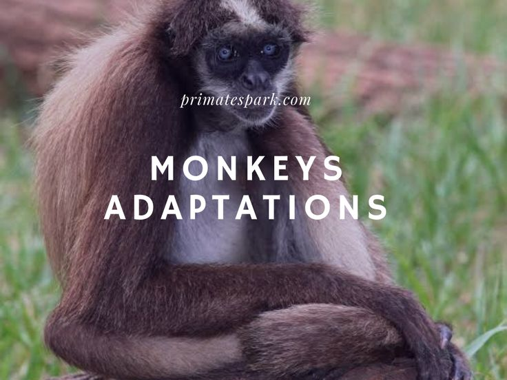14+ Types of adaptations in animals ideas