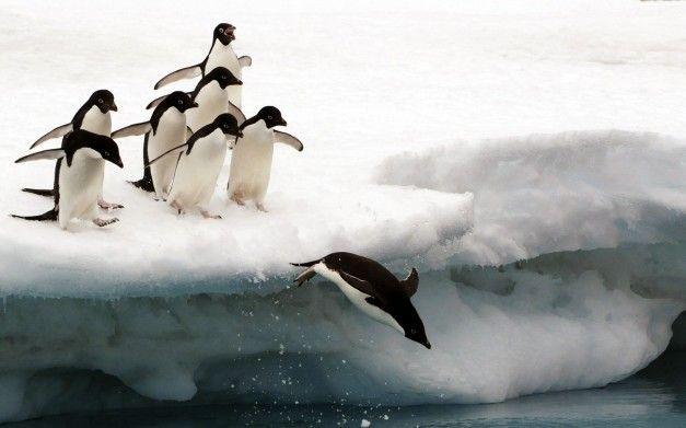 birds_penguins_national_geographic_1600x1200_wallpaper_Wallpaper_2560x1600_www.wall321.com