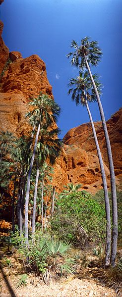 Echidna Chasm, Purnululu National Park in the Kimberley region of Western Australia.