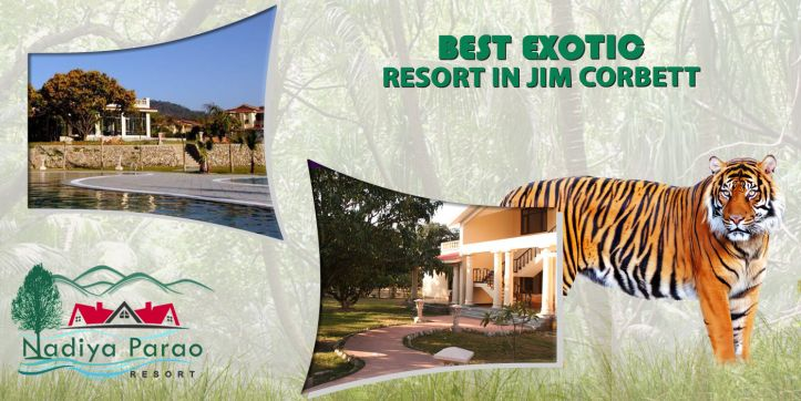 The 4 Star Resorts in Jim Corbett also includes treks of the jungle safari, jeep safari as well as the elephant rides. For getting a glimpse of the majestic Bengal tiger you must go for a jungle safari early in the morning. http://bit.ly/2beaDxd #riversideresortjimcorbett, #4starresortsinjimcorbett, #resortsincorbettpark, #BestResortsJimCorbettSafariBooking, #JimCorbettParkBooking, #CorbettOnlineBooking, #BestHotelsinCorbettNationalPark, #JimCorbettSafariCost, #OnlineCorbettBooking,