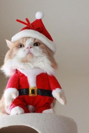 HAHAHAH! We are laughing because to think about our cats letting us do this....