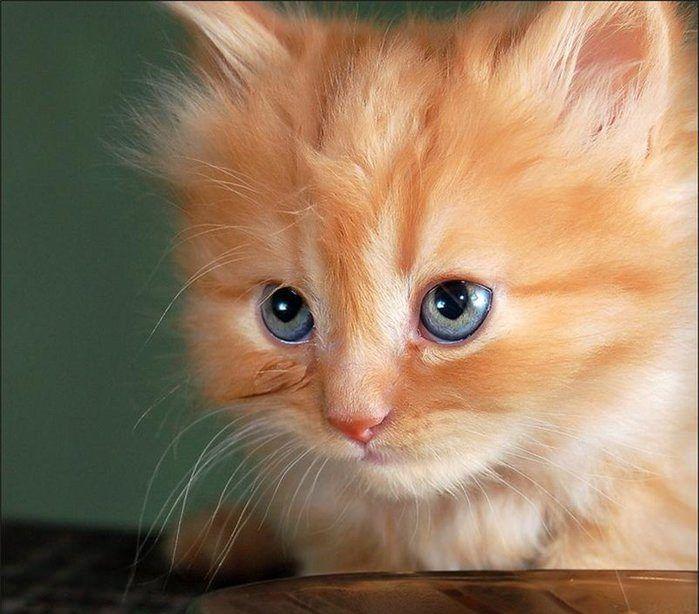 29 Kitten Pictures