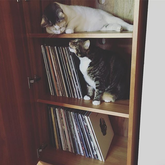 This is either a new home for records or a kitty playhouse. #vinylandchill #keepcalmandplayvinyl #record #blackwax #onmyturntable #vinyl #hifi #instavinyl #turntable #phono #phonograph #recordplayer #nowspinning #stereo #stereophile #highfidelity #hifiaudio #music #musiclover #highendaudio #analogue #music #musiclover #hifi #highendaudio #audio #listeningroom #recordcollector #vinyladdict #indierock #vinylporn #vinylcollection #cats #catstagram