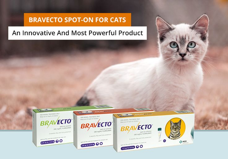 Here Is the New Product - #Bravecto Spot-On For Cats - Fast Acting And Long Lasting #Treatment Against #Fleas And Ticks For #Cats -