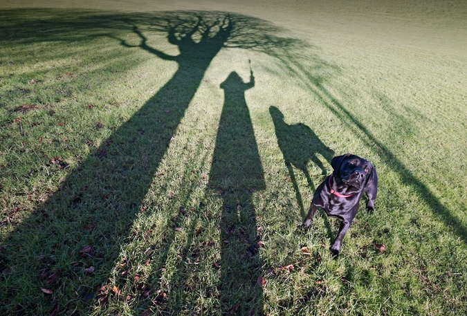 What an interesting perspective of a walk in the park; with a wide-angle lens, long shadows and play-with-me doggy eyes.