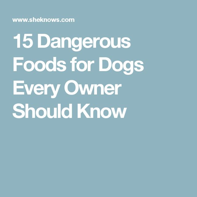 15 Dangerous Foods for Dogs Every Owner Should Know