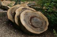 How to Cure Round Slabs of Wood (5 Steps) | eHow