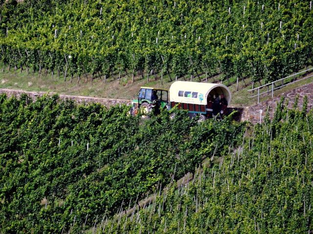 Wine tours in Zell