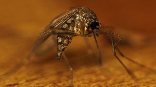 Les meilleurs produits anti-moustiques maison - Améliore ta Santé