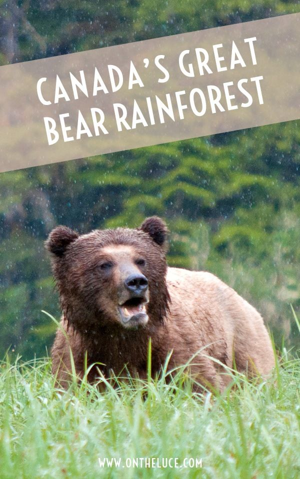 Land of the Grizzly: Canada's Great Bear Rainforest – On the Luce travel blog
