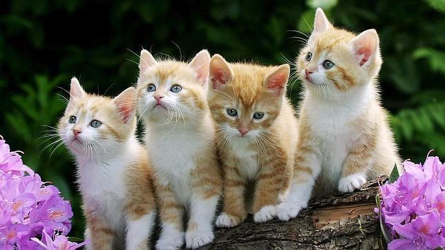 Nace La Gatoteca en Madrid, primera cafetería felina y centro de adopción de gatos -- Qué.es --