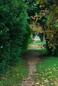 Garden at Burrawang Village Hotel, Southern Highlands