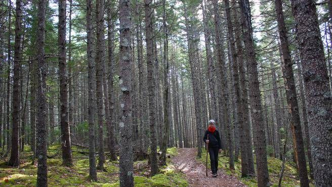 The eight-kilometre Nine Mile River trail system is home to towering hemlocks and mossy forest floors — a perfect spot for a late fall hike before the snow settles in. (FRANCES WILLICK)