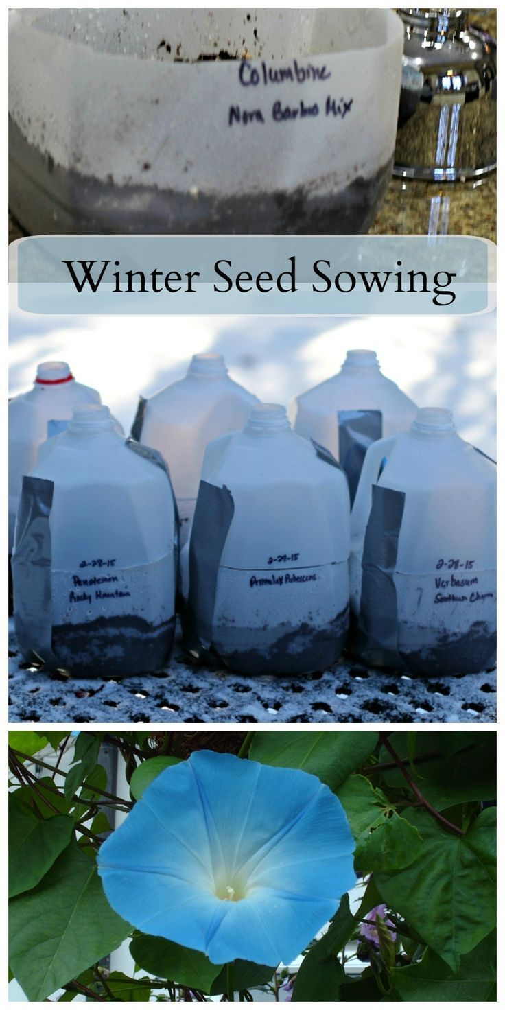 176 best winter sown gardening images on pinterest flower