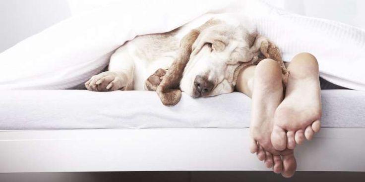 Τα άγνωστα οφέλη του να κοιμάστε με το σκύλο σας!