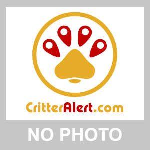 FOUND DOG: 08/06/2017 - College Town, Bracknell Forest, England, United Kingdom. Ref#: F31267 - #CritterAlert #FoundPet #FoundDog