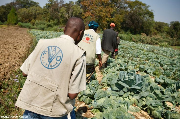 Today (5/12/2013) is International Volunteer Day! FAO is always seeking volunteers - check out our programme: http://www.fao.org/employment/volunteering-with-fao/en/