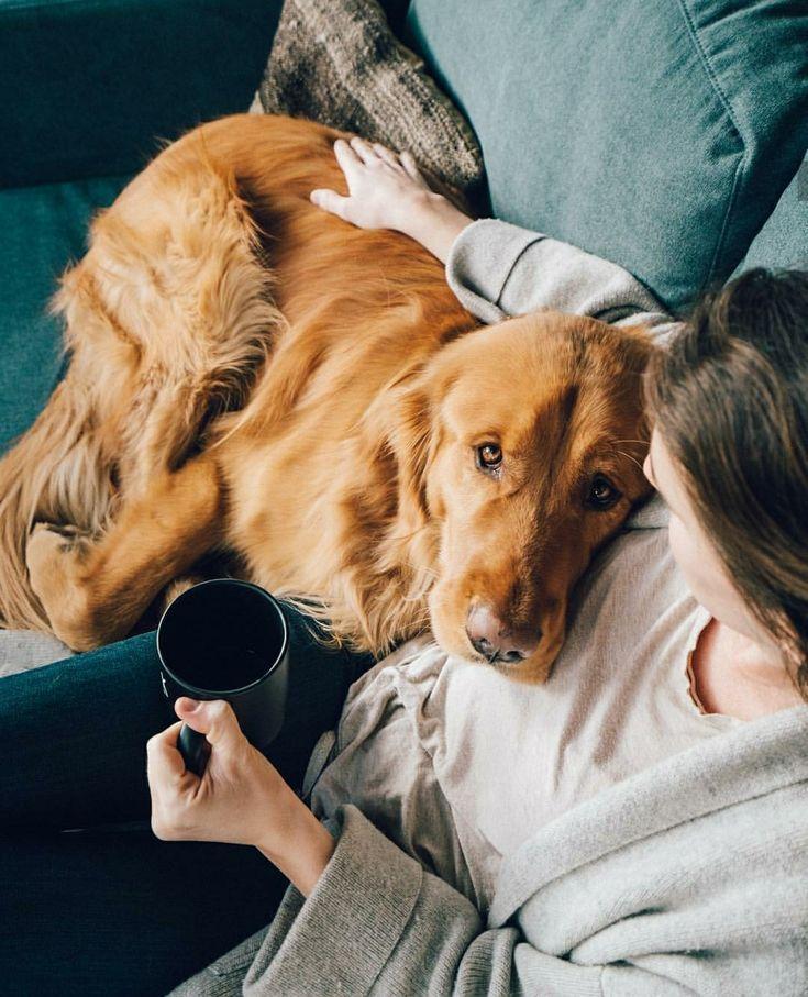 Repin Alcottgear Cabin Dog Dogs Dog Love Cute Animals