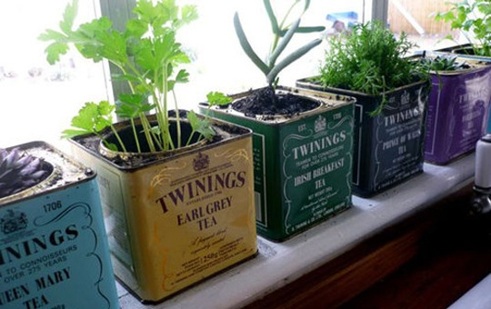 Great for cooks...grow herbs in recycled ornamental tea tins on a sunny kitchen window sill