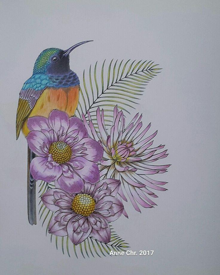 Birdtopia Daisy Fletcher  My choice of colours