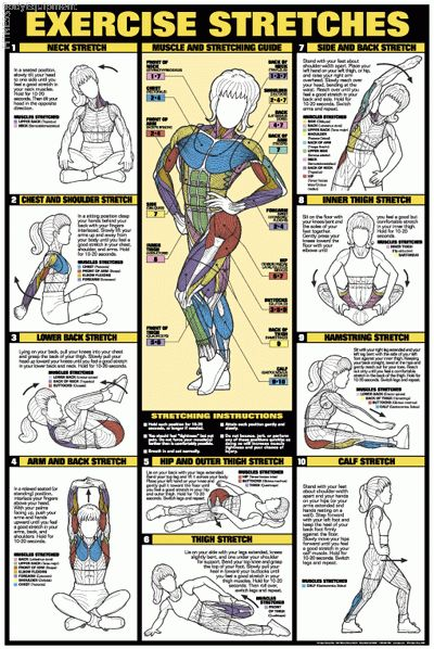 #Stretching #Prevent Injuries #Muscles being Stretched