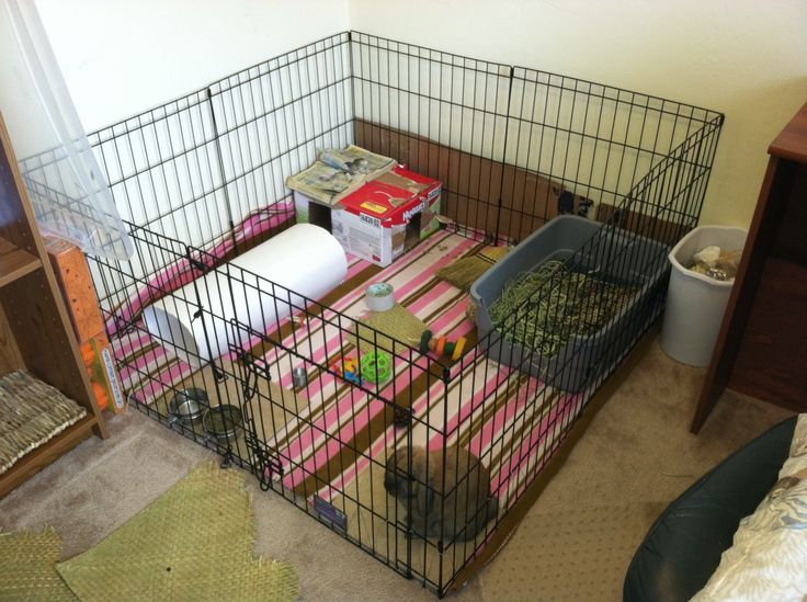 Pigs n buns small pet rescue house hunters small pet for Indoor pig pen ideas