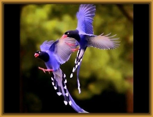 Ms de 25 ideas increbles sobre Aves tropicales en Pinterest