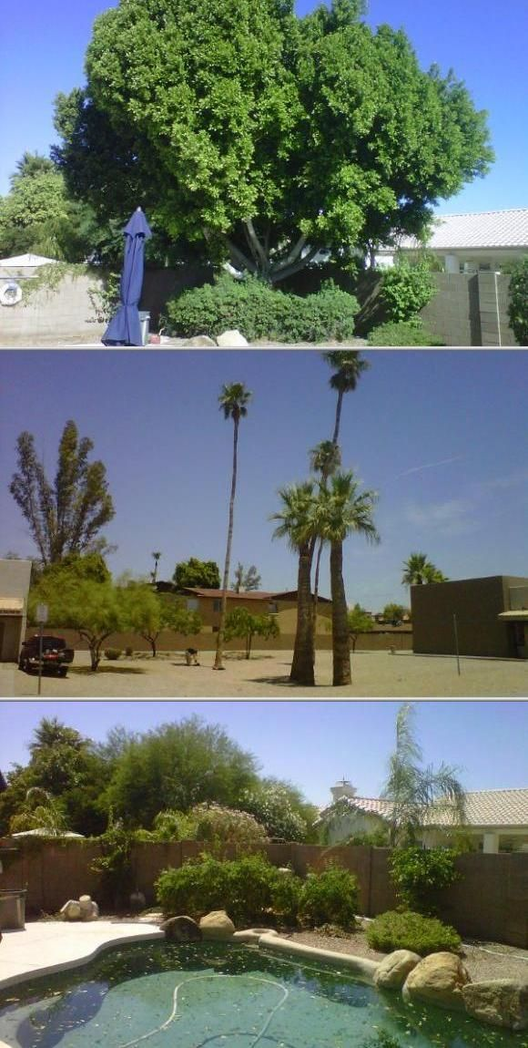 Desert Arbor Care offers some of the best lawn fertilizer services. They also specialize in tree removal and trimming. This company is fully insured and can match any tree company's quote.