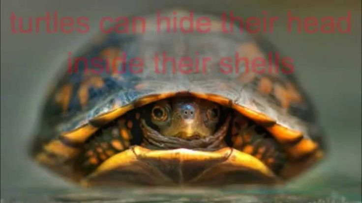 FUN TURTLE FACTS FOR KIDS