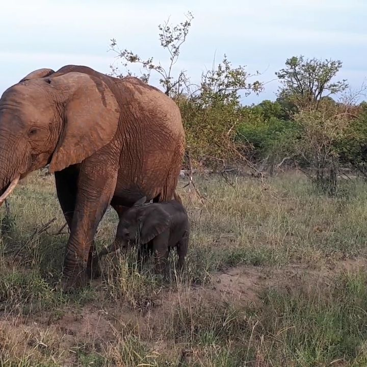 Mother Elephant Bringing Her Precious Baby Right Up To The Vehicle Africannature Wildli Elephant Elephant Love Elephant Images
