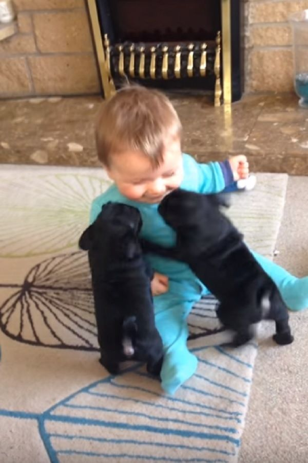 Baby Louie Has The Best Time Of His Life Playing With Pug Puppies