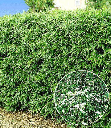 24 best Häuser ♥ Garten ♥ Bambus images on Pinterest Bamboo - japanischer garten bambus