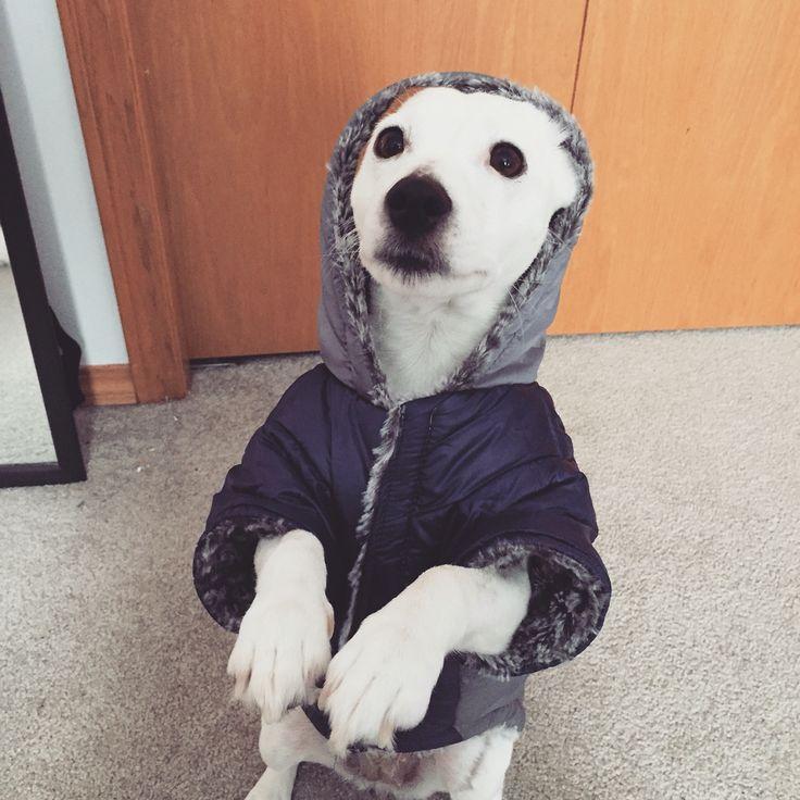 Juno in her jacket