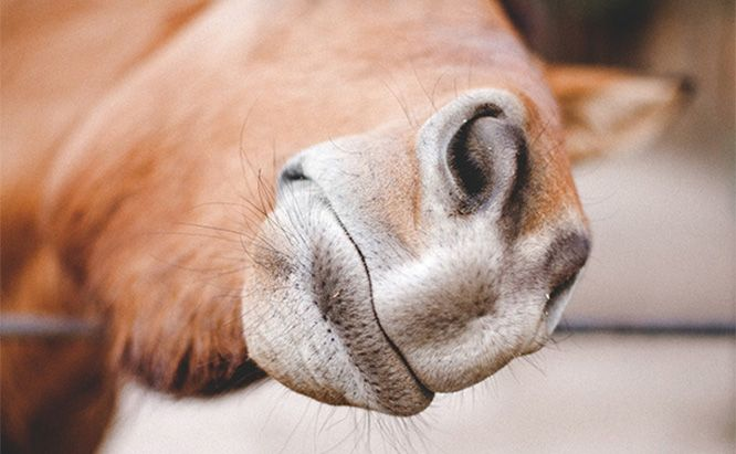 15 Mistakes You're Making with Your Electric Horse Fence