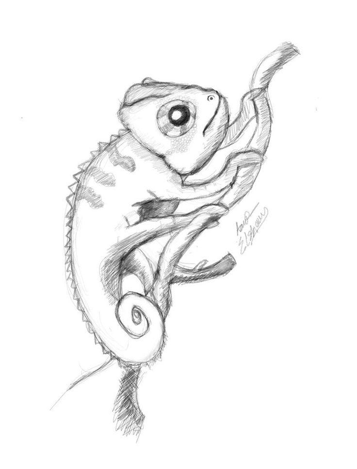 Ordentliche Skizze Eines Chamaleons Tierzeichnung Tiere Zeichnen Chamaleon