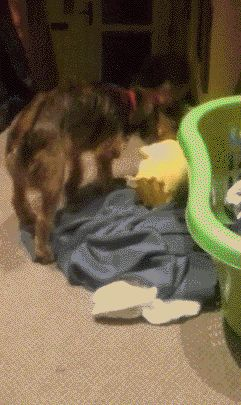 Hund ger Bart lite kärlek