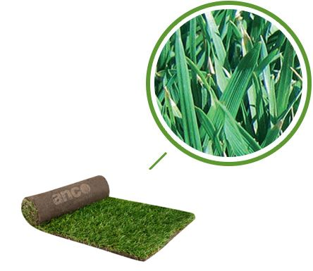 RTF Tall Fescue Lawn in Melbourne If you are looking to buy tall fescue lawn in Melbourne then Anco Turf is the right place for you. Call 1800 010 110 to know more.