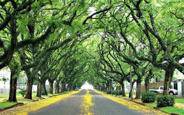 Зеленая улица Руа-Гонсалу-де-Карвальо (Rua Gonçalo de Carvalho), Бразилия