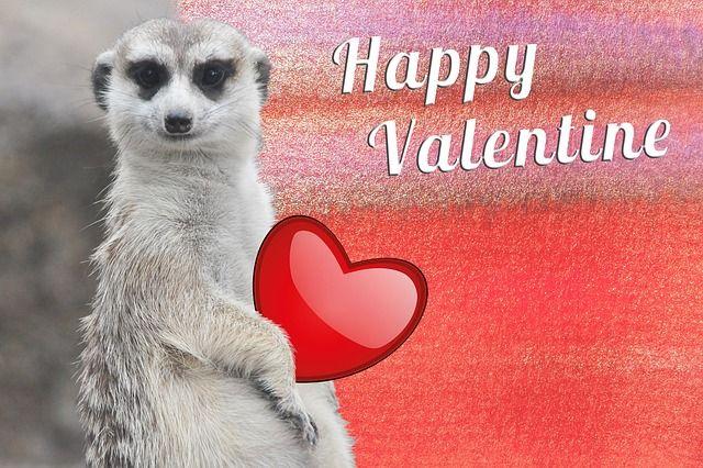 Valentin napi állatos képeket keresel? Legjobb Valentin-napi cicás képek, legjobb Valentin-napi kutyás képek. Nézd meg a Valentin napi állatos képeket!