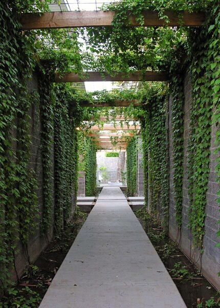 I like the narrow bed at foot of green wall and how vines can climb overhead too