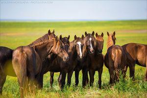 дикие лошади ◆ wild horses